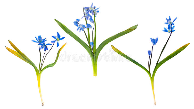 Set of wild spring flowers pressed isolated royalty free stock image