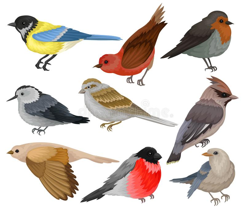 Set of winter birds. Wildlife and fauna theme. Wild feathered animal. Flat vector elements for ornithology book. Set of 9 different winter birds. Wildlife and vector illustration