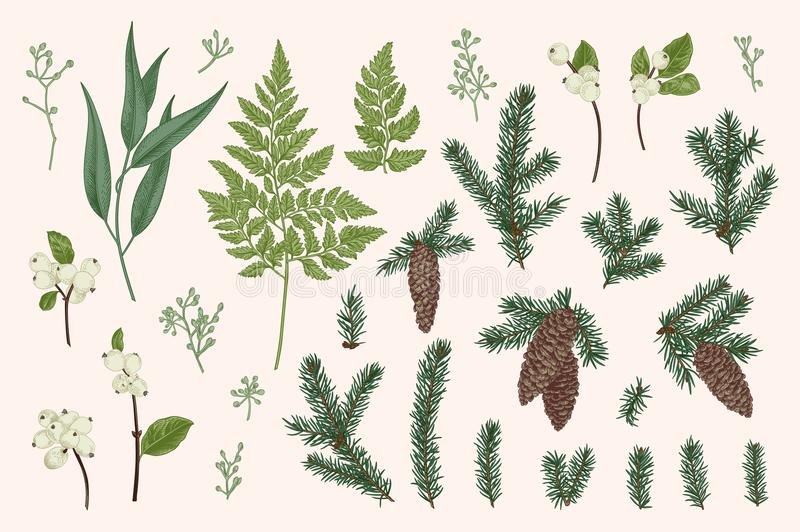 Set with winter plants. vector illustration