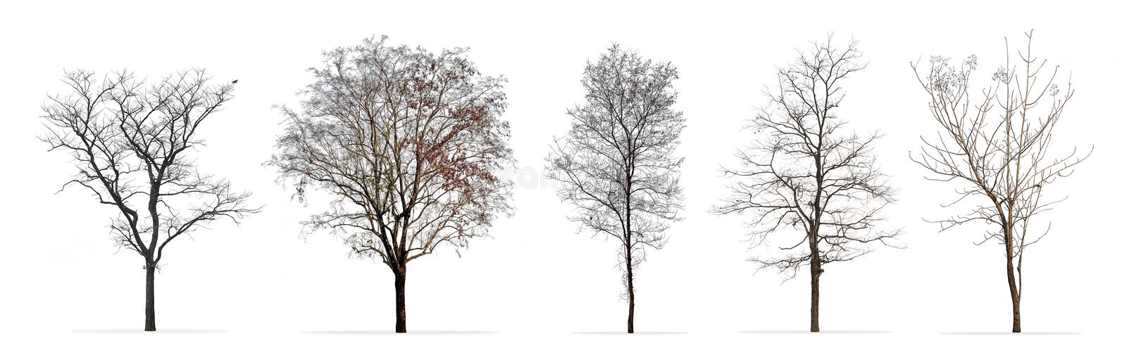 Set of winter trees without leaves isolated on white. Background stock photography