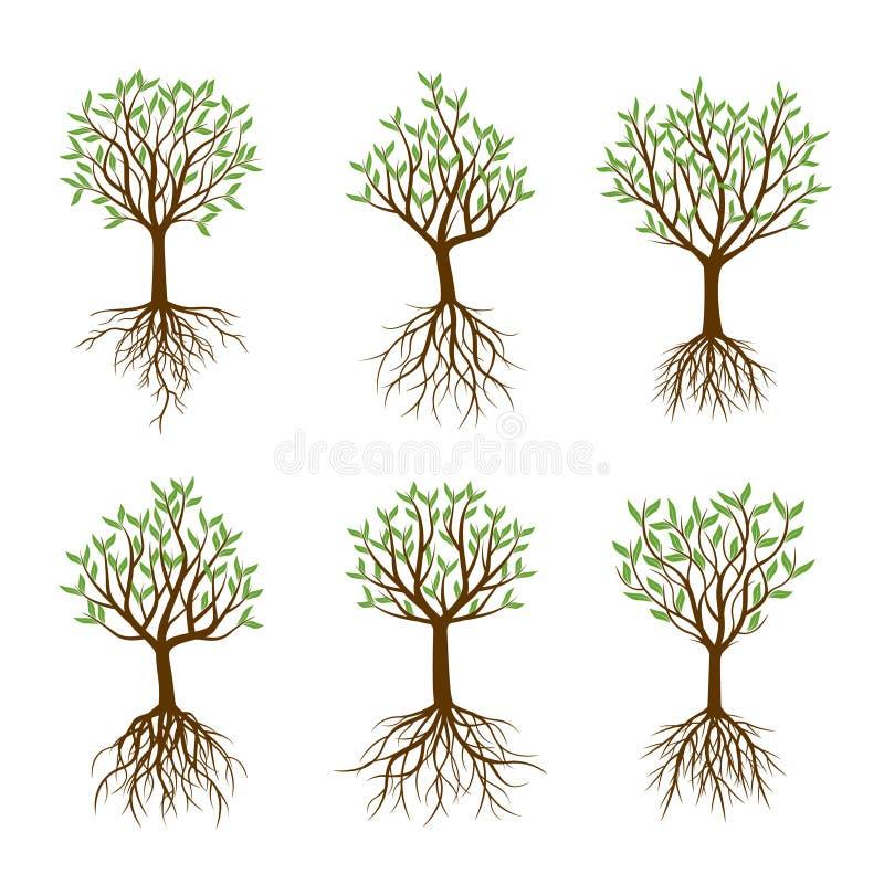Set wiosen drzewa z korzeniami ilustracja wektor