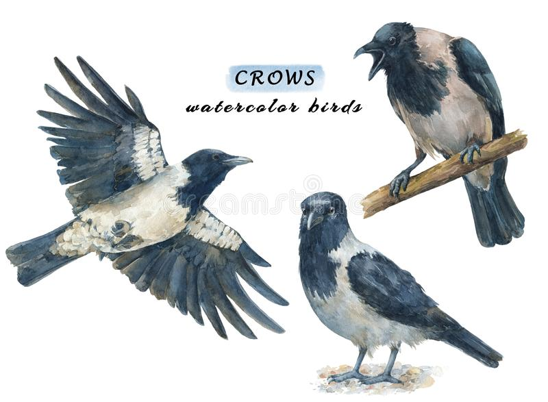 Set wron, spokojnych i latających ptaki - gniewnych, ilustracji