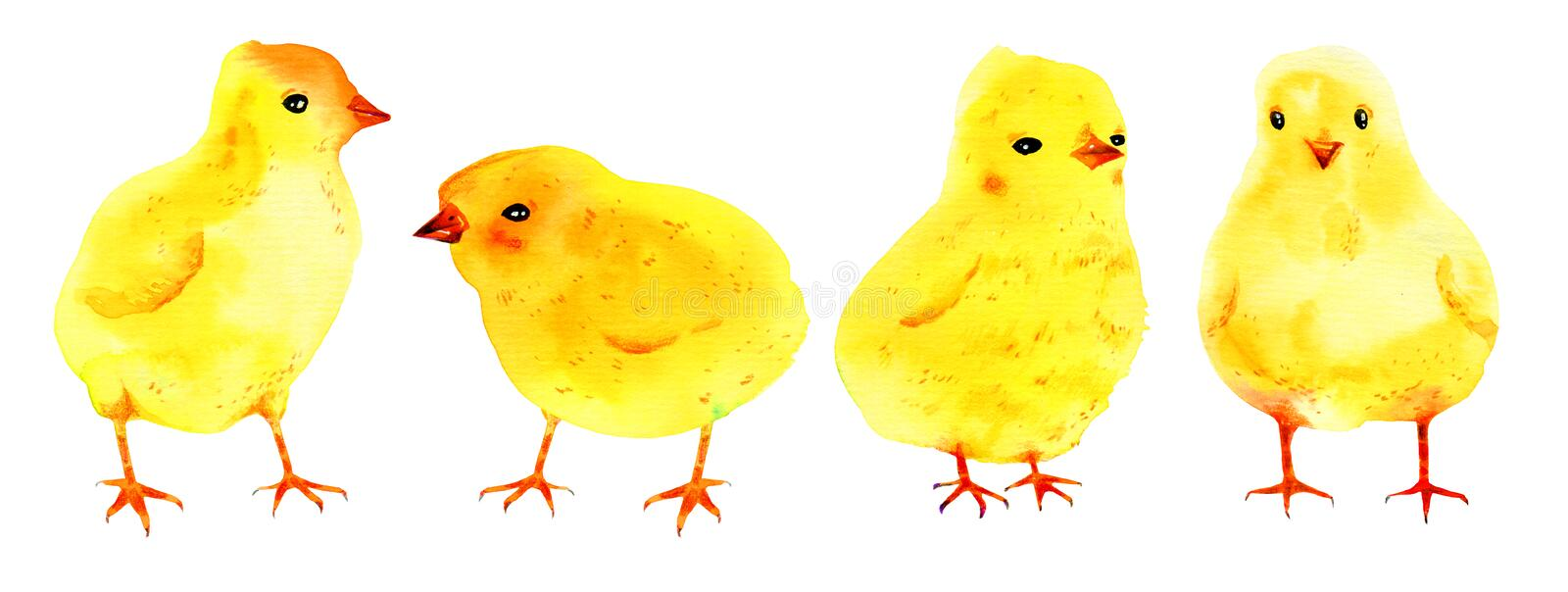 Set with yellow baby chickens. Hand drawn watercolor sketch illustration royalty free illustration