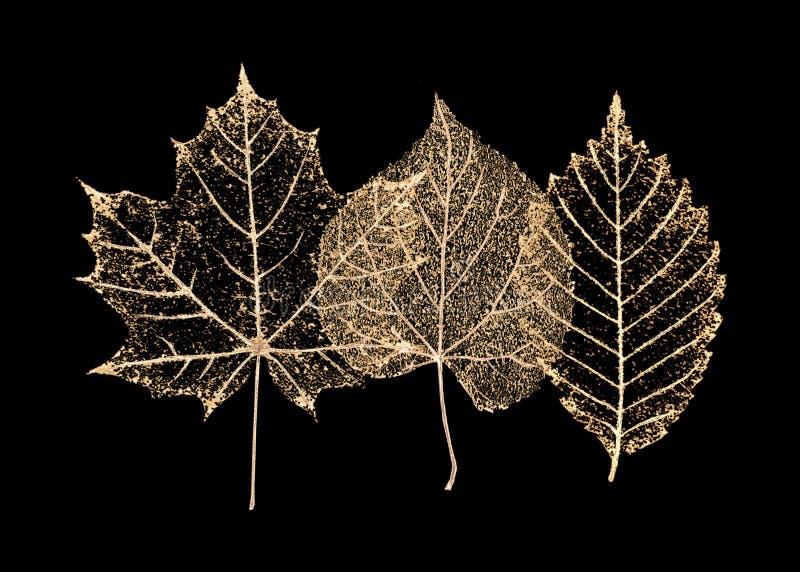 Set złocisty kościec opuszcza na czarnym tle ilustracji