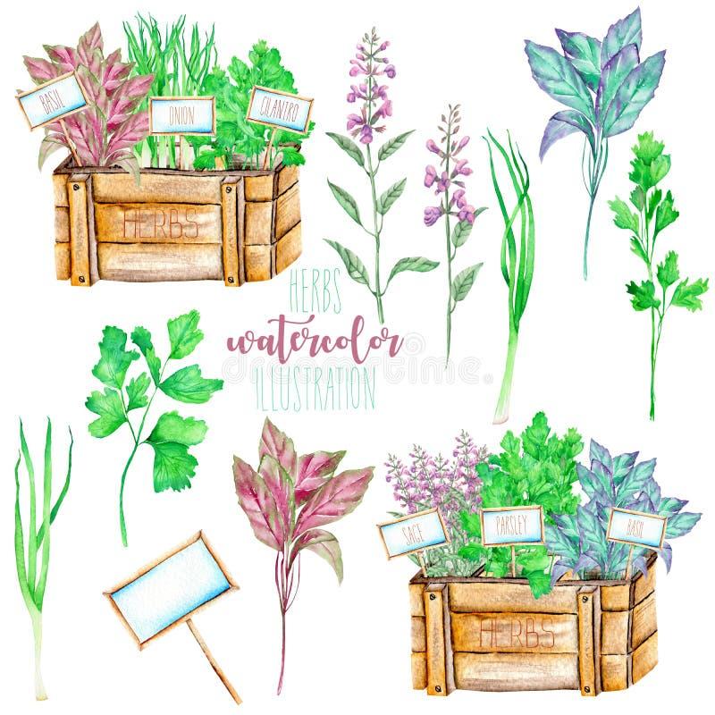 Set z akwareli pikantność korzennymi ziele royalty ilustracja