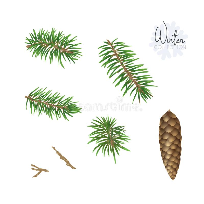 Set z boże narodzenie rośliną ilustracja wektor