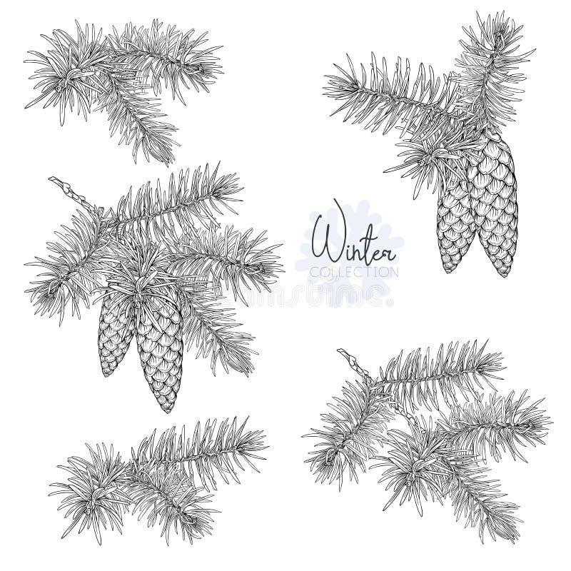 Set z boże narodzenie rośliną ilustracji