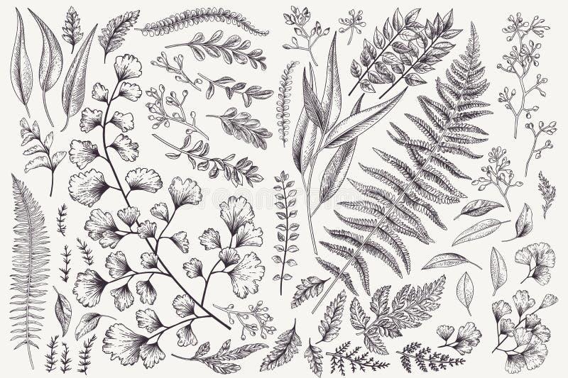 Set z liśćmi i paprociami ilustracji