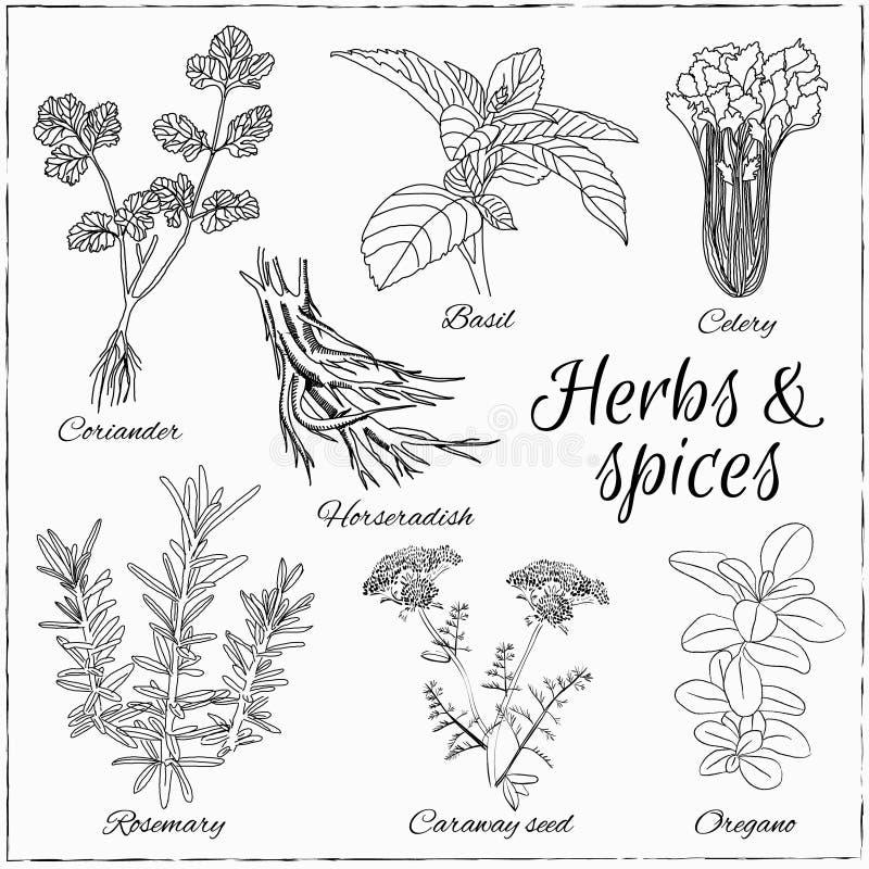 Set z ziele i pikantność royalty ilustracja