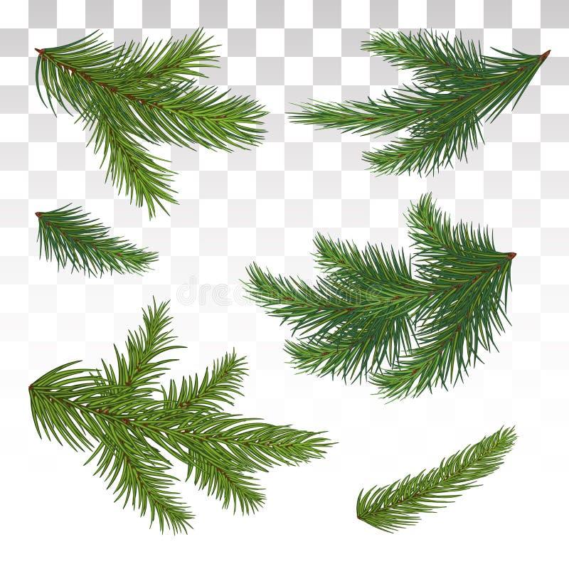 Set zielone sosnowe gałąź odosobniony Boże Narodzenia dekoruje Chri ilustracja wektor