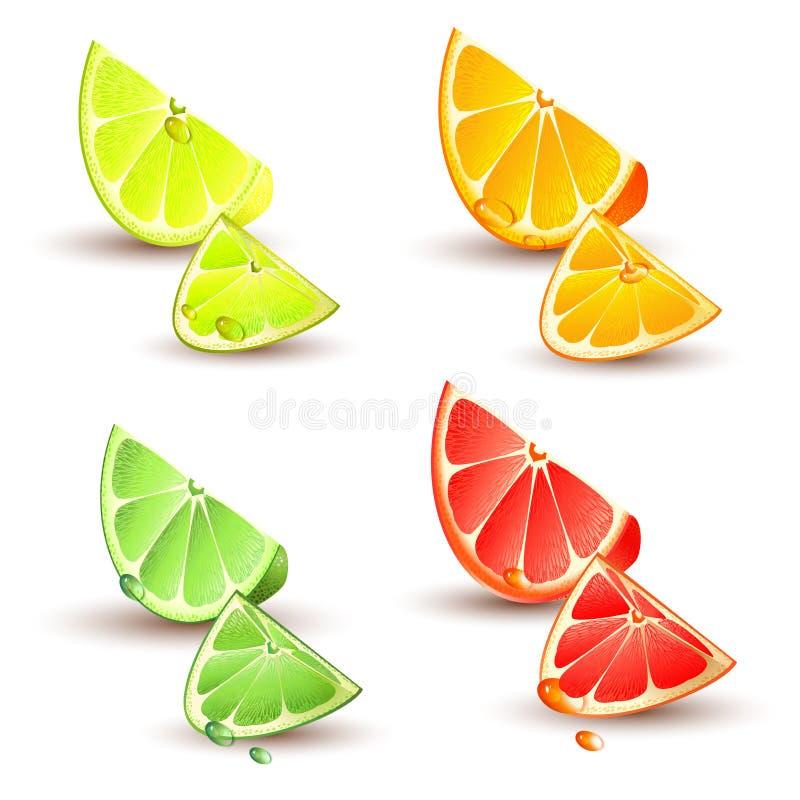 Download Set Zitrusfrucht vektor abbildung. Illustration von frühstück - 26371059