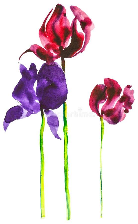 Set zmroku - czerwoni i purpurowi tulipany Akwareli ilustracja odizolowywaj?ca na bia?ym tle ilustracja wektor