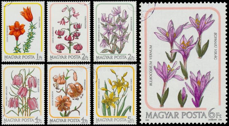 Set znaczki drukujący w Węgry pokazuje leluje zdjęcie royalty free
