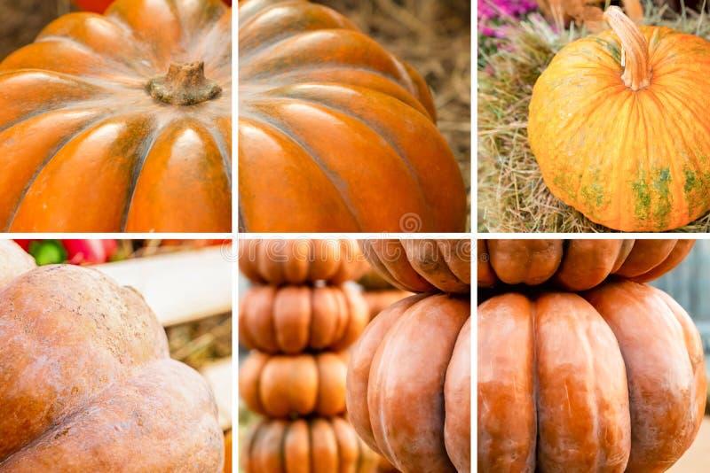 Set Zusammensetzung der Kürbisernte Herbsternte stockfotografie