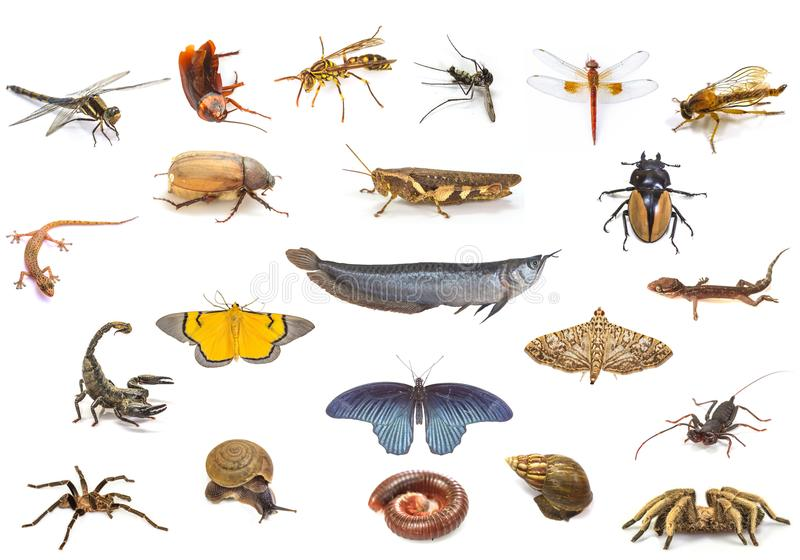 Set zwierzęta na białym tle obraz stock