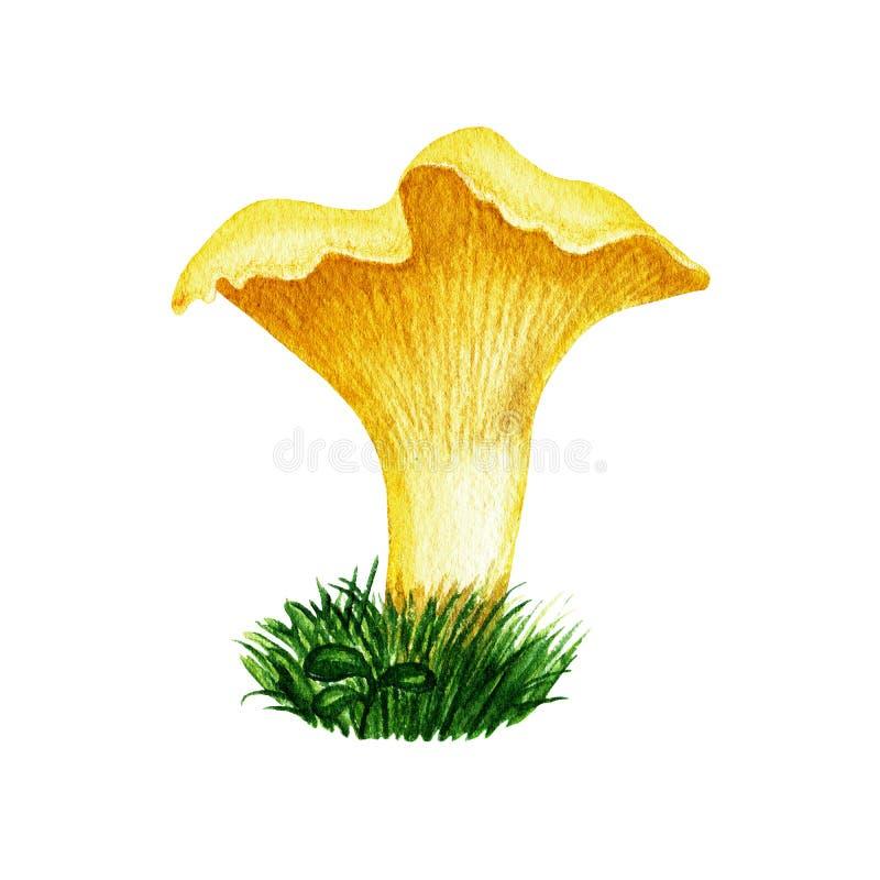Seta amarilla comestible del bosque salvaje del otoño de la acuarela con el casquillo ondulado de la belleza en hierba Objeto ais libre illustration