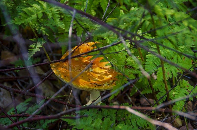 Seta anaranjada en helechos imagenes de archivo