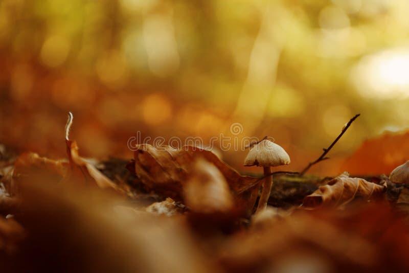 Seta con las hojas caidas en la tierra en bosque imagen de archivo