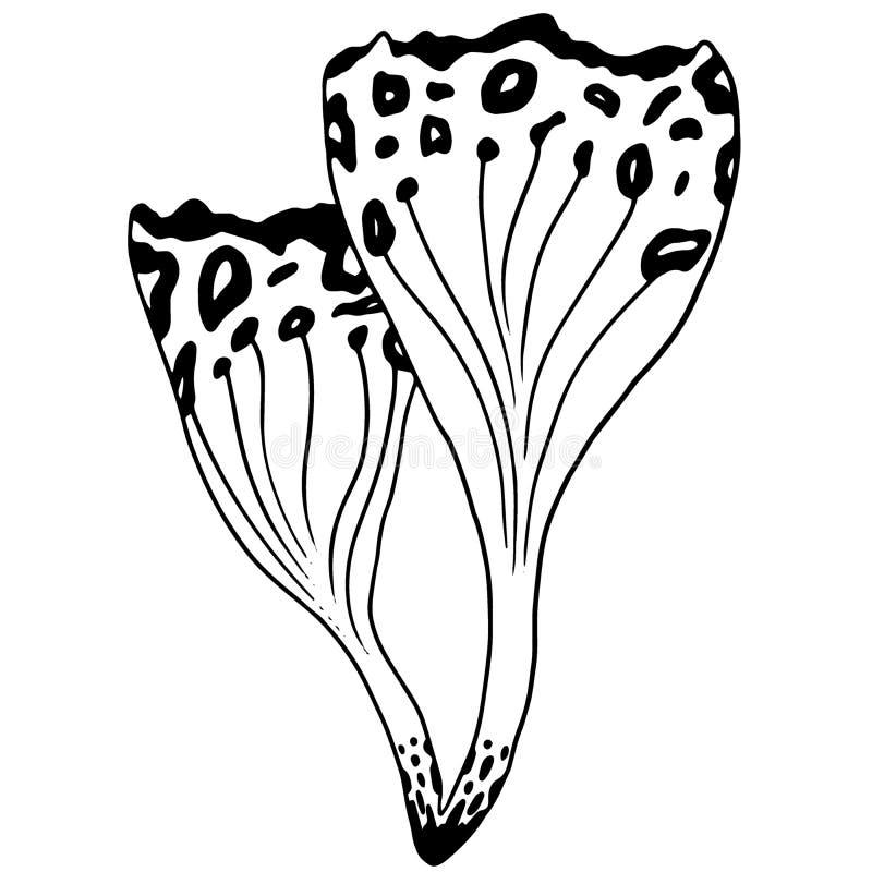 Seta elegante inusual del bosque del cordón L?nea a mano arte del bosque misterioso ilustración del vector
