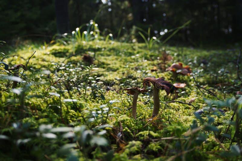 Seta en el bosque fotos de archivo