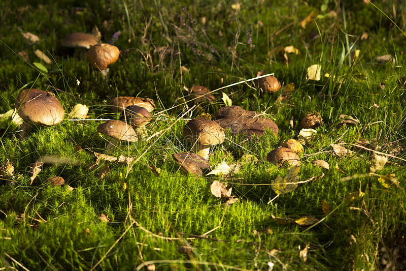 Seta en el bosque foto de archivo libre de regalías