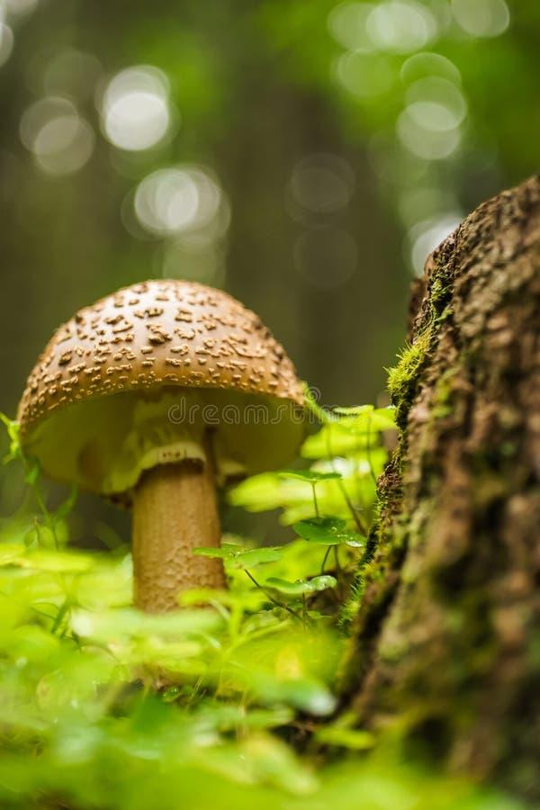Seta en el cierre del bosque para arriba imágenes de archivo libres de regalías