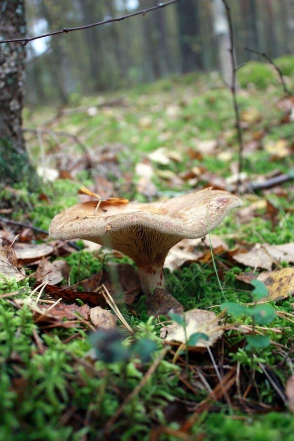 Seta en las maderas Plantas del bosque imagenes de archivo