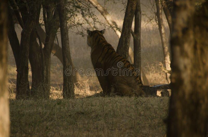 Seta na selva fotos de stock royalty free