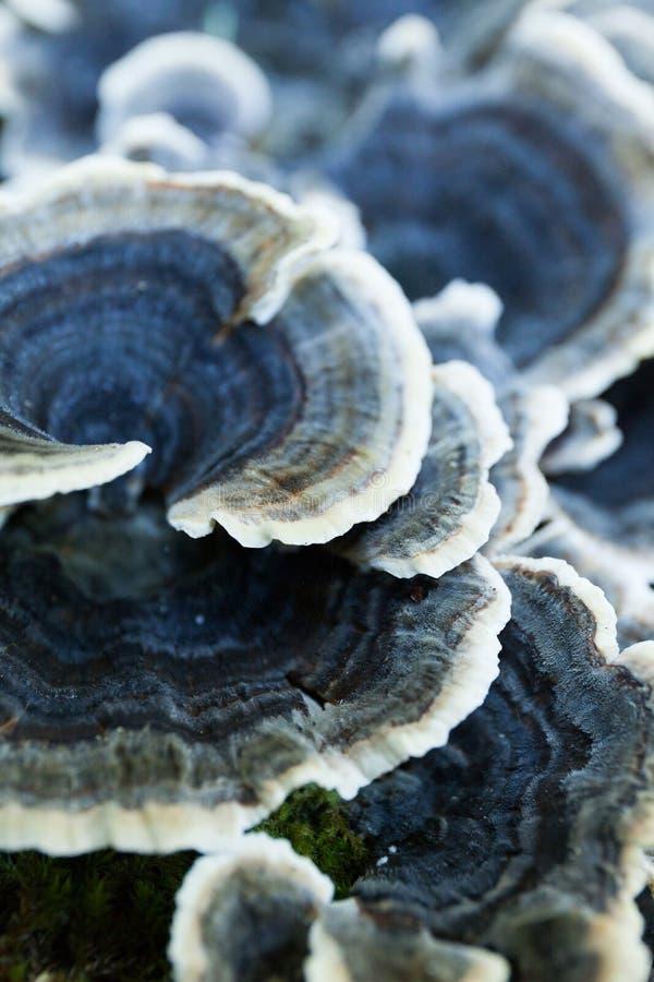 Seta no comestible creciente de la naturaleza del otoño en árbol imagen de archivo libre de regalías