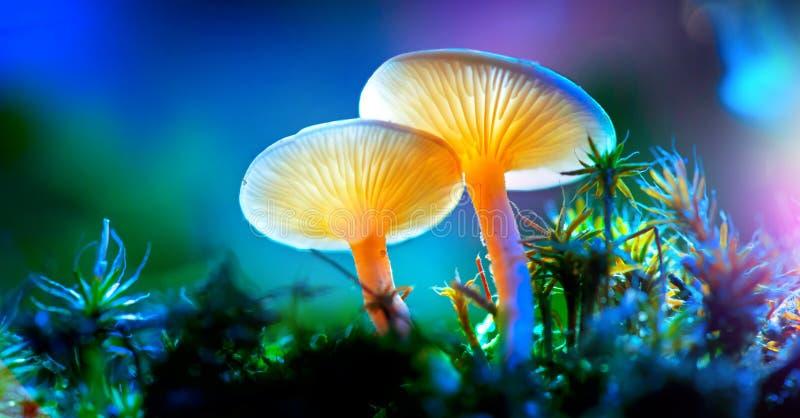 Seta Setas que brillan intensamente de la fantasía en bosque de la oscuridad del misterio foto de archivo libre de regalías