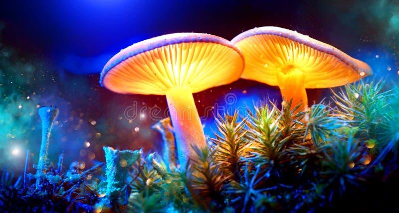 Seta Setas que brillan intensamente de la fantasía en bosque de la oscuridad del misterio fotografía de archivo