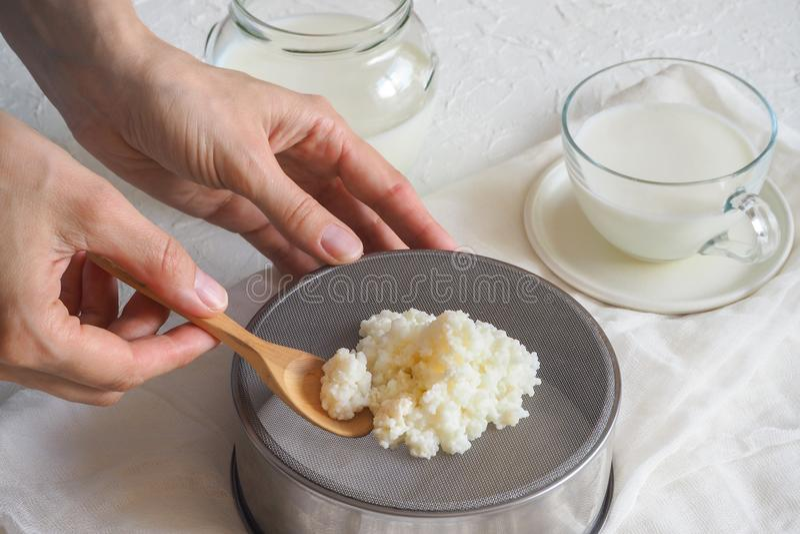 Seta tibetana de la leche Granos probióticos orgánicos del kéfir de la leche El concepto de una dieta sana y de consolidar el sis imagenes de archivo