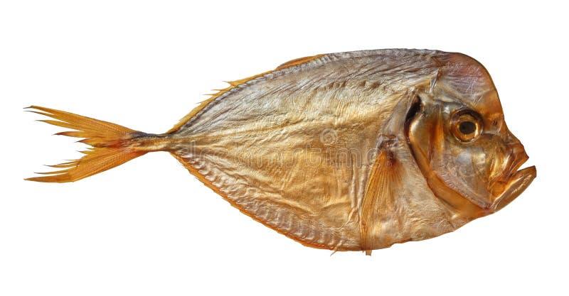 Setapinnis ahumados del vomer de los pescados en un fondo blanco foto de archivo