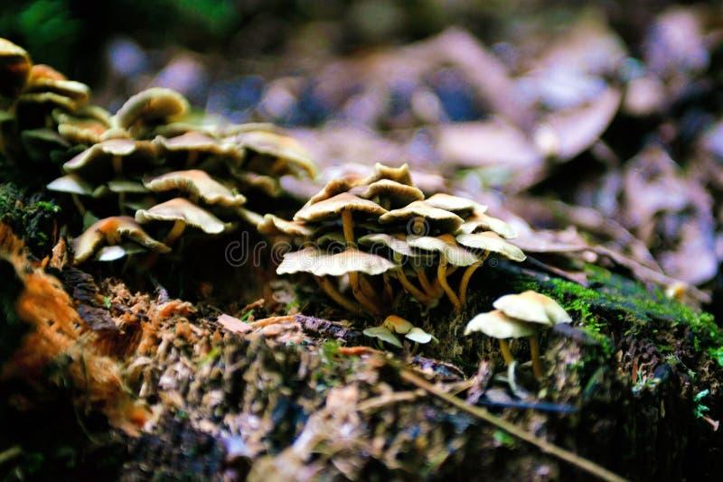 Setas, alucinógeno, efecto de la falta de definición, ingredientes estacionales, Forest Ground, veneno fotografía de archivo libre de regalías