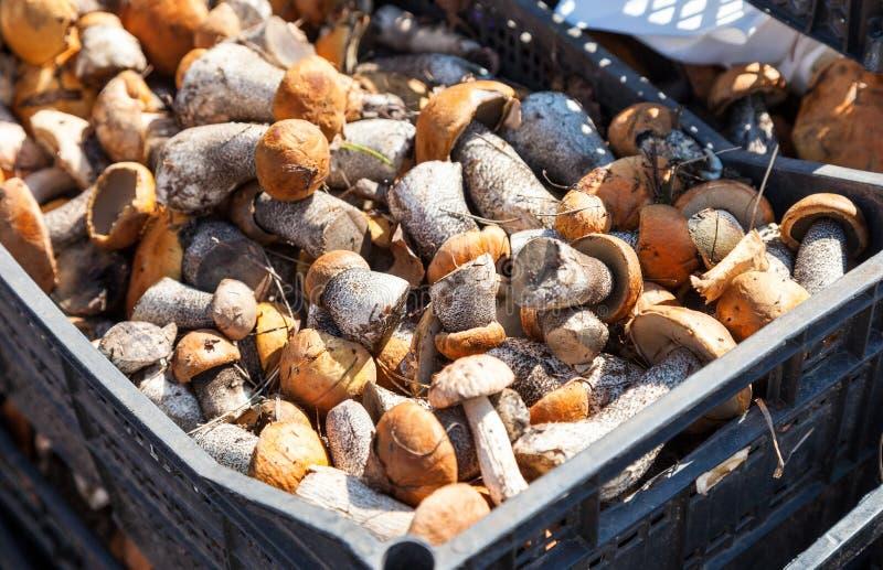 Setas comestibles listas para la venta en el mercado local imagen de archivo