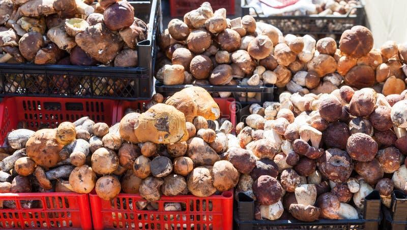 Setas comestibles listas para la venta en el mercado local fotos de archivo