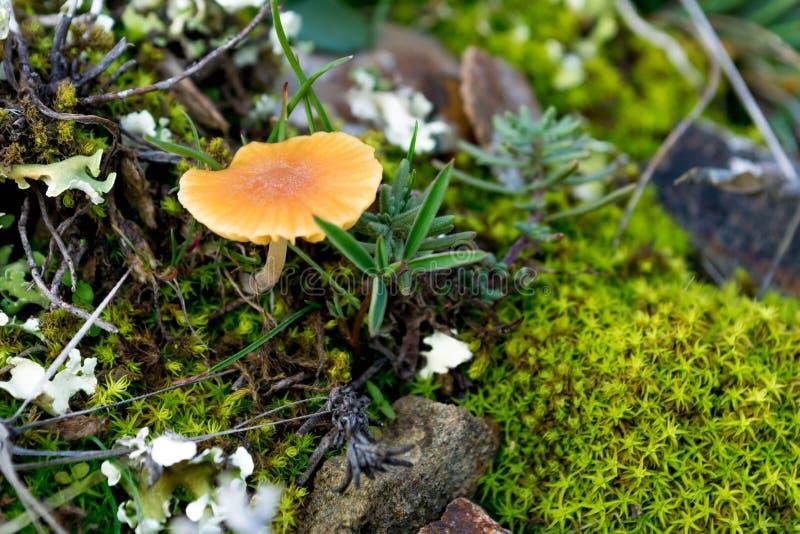 Setas 8 del bosque foto de archivo