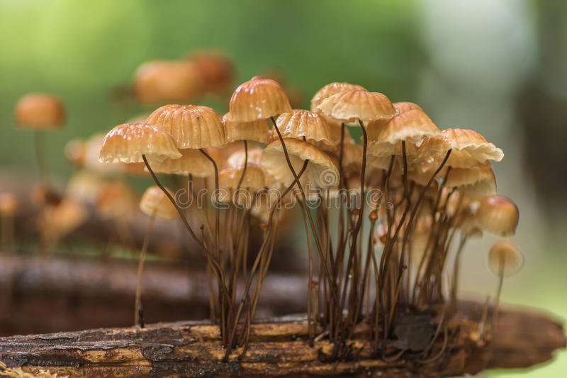 Setas en bosque foto de archivo