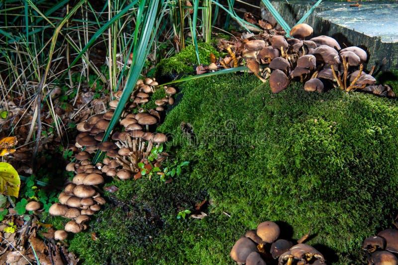 Setas en bosque en tronco de árbol foto de archivo libre de regalías