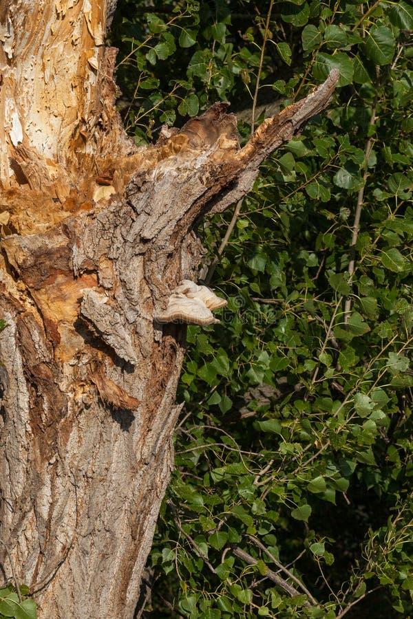 Setas en el árbol fotografía de archivo