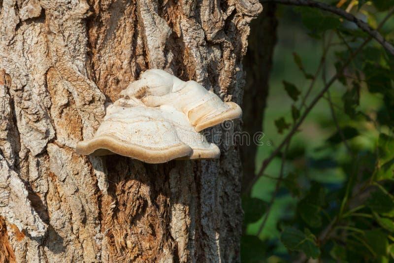 Setas en el árbol imágenes de archivo libres de regalías