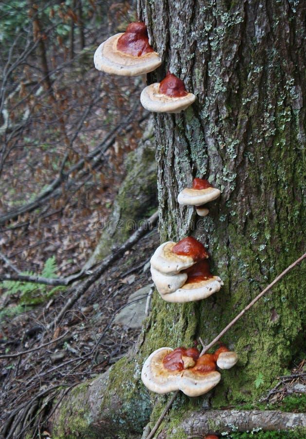 Setas en un árbol fotografía de archivo libre de regalías