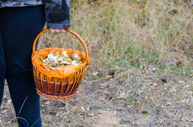 Setas en una cesta de mimbre imagen de archivo libre de regalías