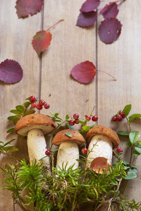 Setas frescas con el musgo y el arándano imagen de archivo