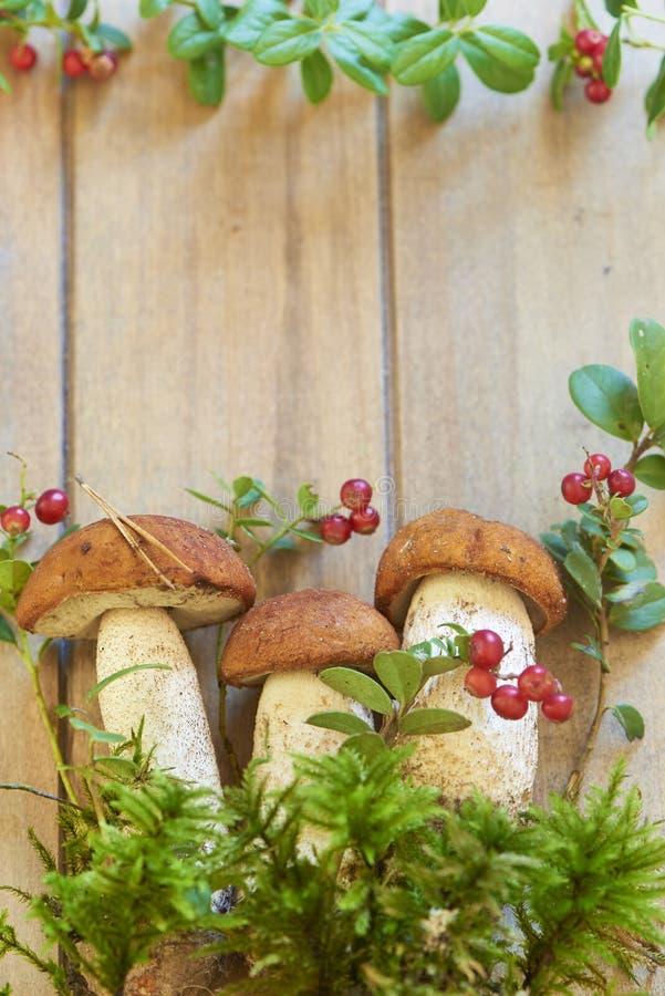 Setas frescas con el musgo y el arándano imagen de archivo libre de regalías