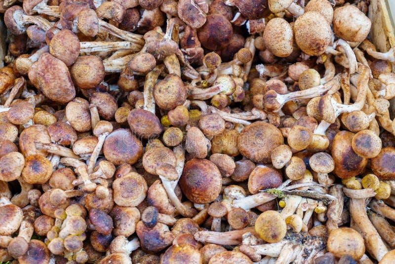 Setas - producción orgánica en el mercado de los granjeros fotografía de archivo