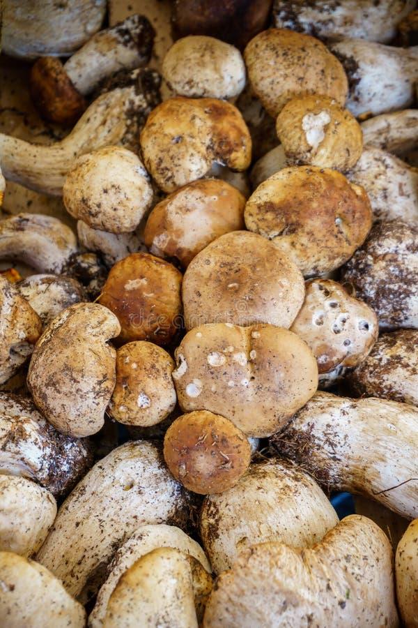 Setas - producción orgánica en el mercado de los granjeros fotos de archivo