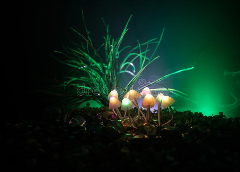 Setas que brillan intensamente de la fantas?a en primer oscuro del bosque del misterio El tiro macro hermoso de la seta m?gica o  foto de archivo