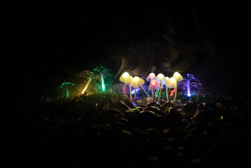 Setas que brillan intensamente de la fantas?a en primer oscuro del bosque del misterio El tiro macro hermoso de la seta m?gica o  imagenes de archivo