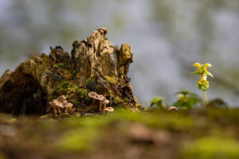 Setas, tronco de árbol putrefacto y ortiga muerta amarilla imagen de archivo